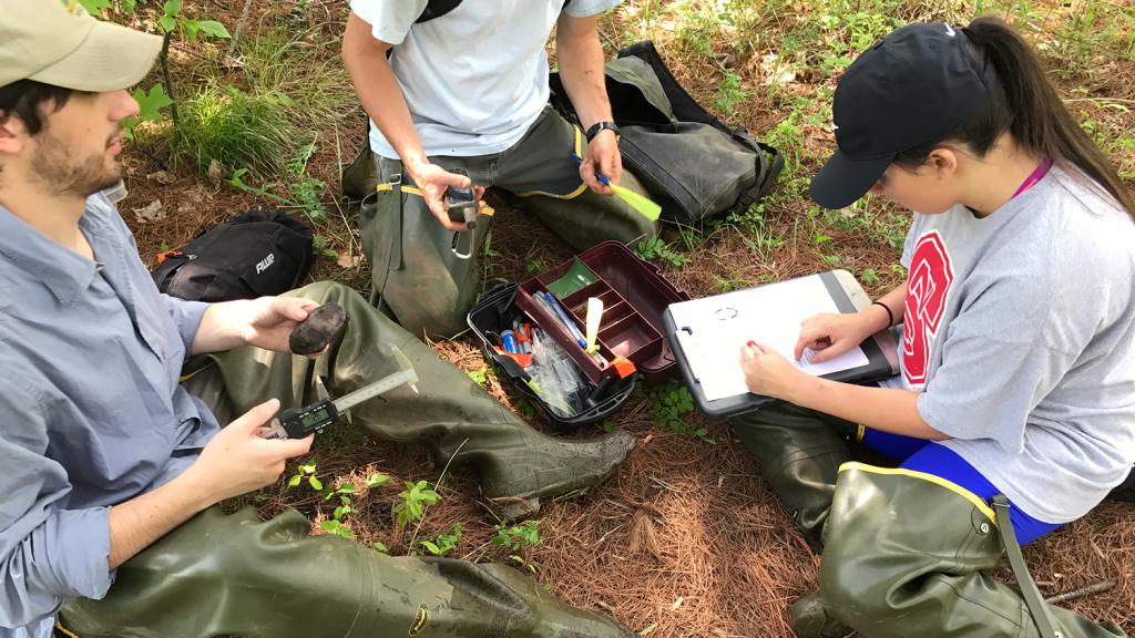 Doris Duke Group researching Bog Turtles - Doris Duke Conservation Scholars Program - Forestry and Environmental Resources Spotlight: William Casola - Forestry and Environmental Resources NCState University