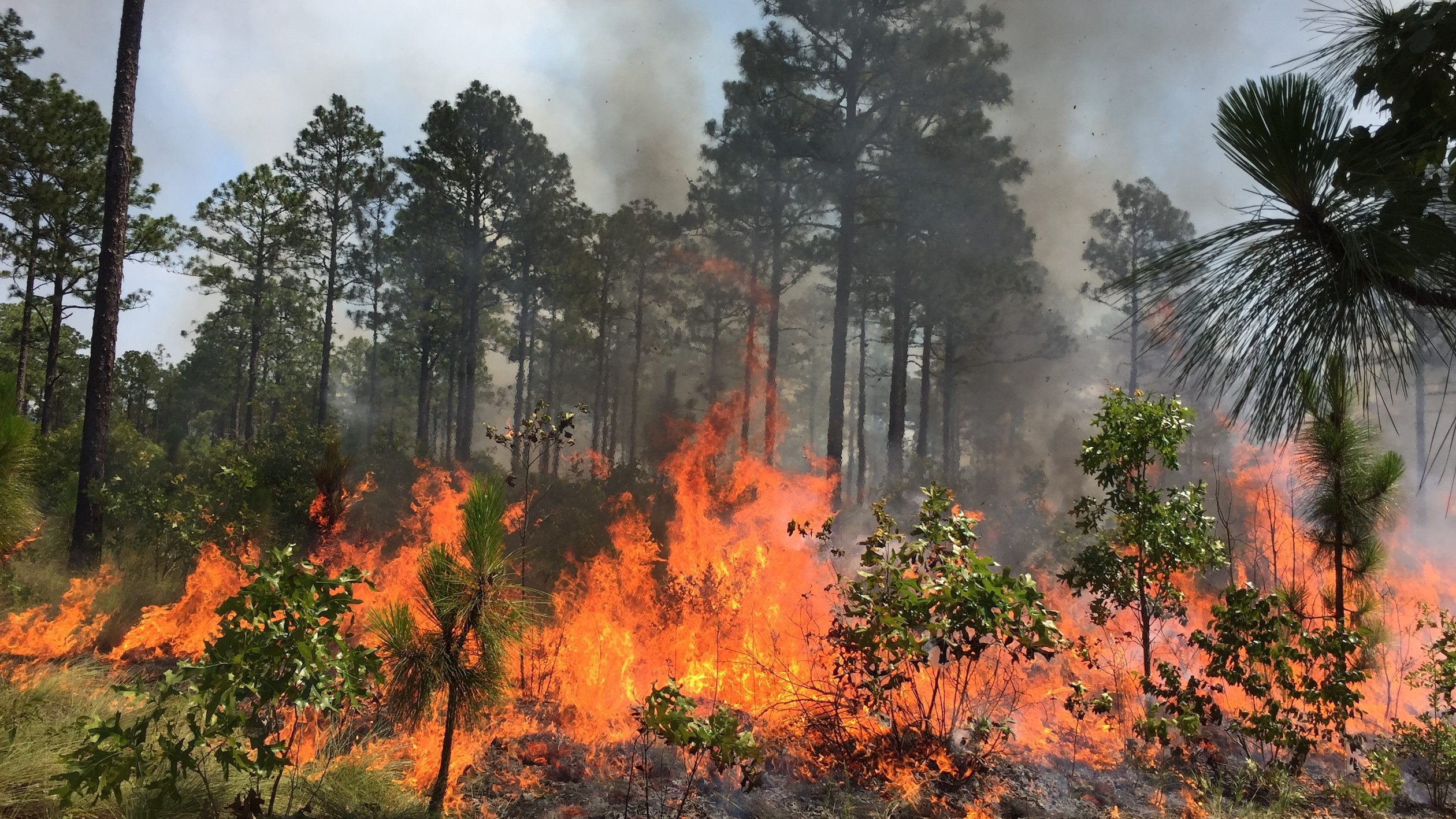 Fire in Forest - Per Frisk: The Nature Conservancy Volunteer to Burn Technician Position - Forestry and Environmental Forestry and Environmental Resources NCState University