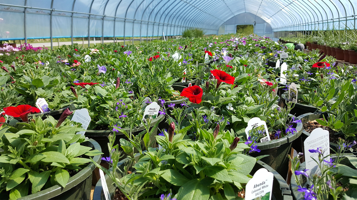 greenhoues/nursery - Green Inudstries Create a Stronger Economy in North Carolina - Forestry and Environmental Resources NC State University