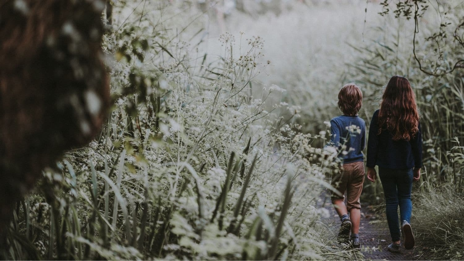 Children in nature - Study Finds Natural Outdoor Spaces Are Less Common at Schools - Forestry and Environmental Resources NC State University