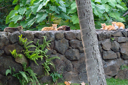 feral cats sunning