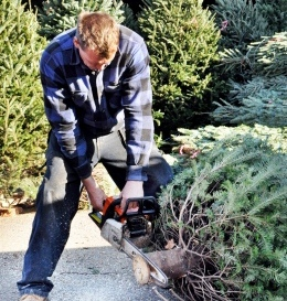 William Clark trims the trunk of a fraser fir tree.  Photo by NCSu Student Media