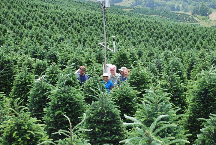 Christmas Tree Genetics Research and Extension | Department of ...