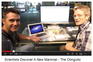 Watch the Untamed Science Video about the Olinguito