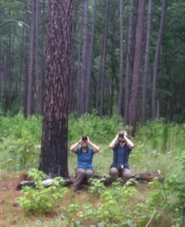 Fox squirrel research being conducted at Fort Bragg, NC