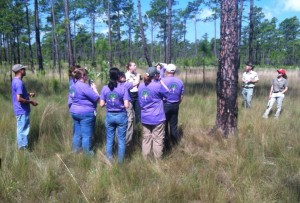 Teachers learn about the Longleaf pine ecosystem at the Croatan National Forest