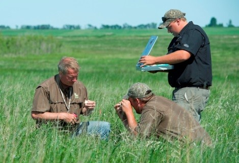 Delta Waterfowl president Frank Rohwer (left) assists technicians Garrett Trentham (bottom) and Luke Gilbert (right) in marking and recording data on a newly found duck nest. Photo credit: Fred Greenslade, Delta Waterfowl