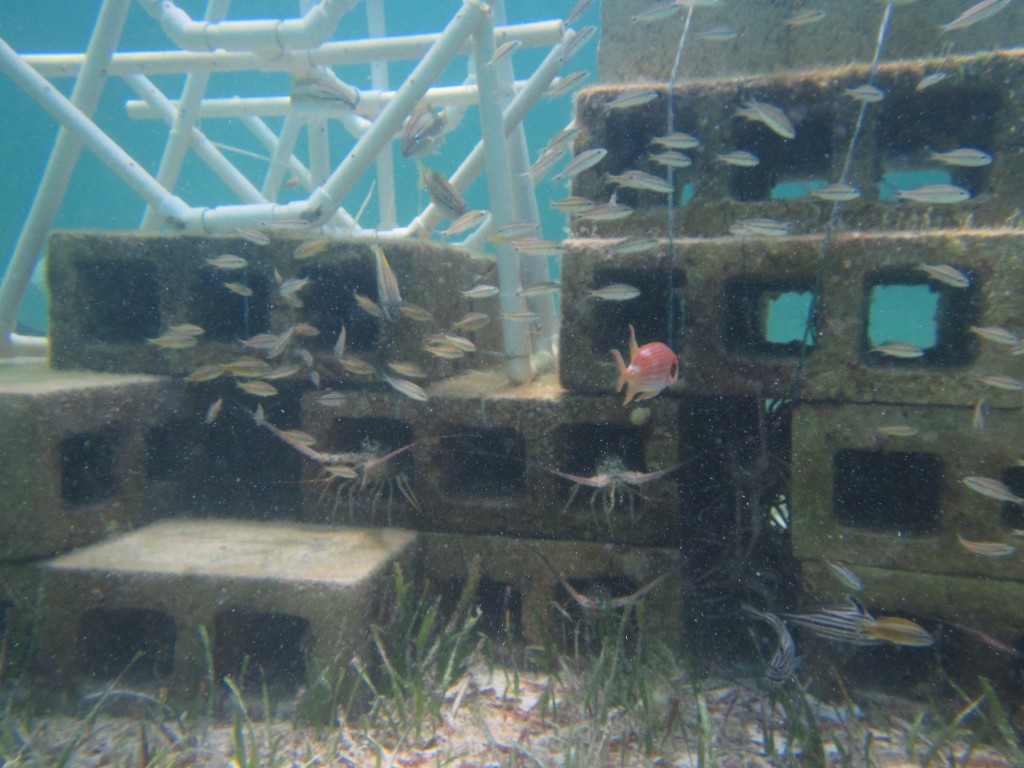 One of the reefs Hannah and the team constructed.