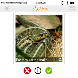 "Tinder ""profile"" of the eastern garter snake."