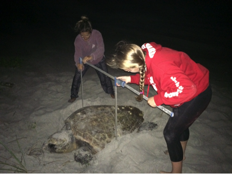 Morgan and I measuring a loggerhead sea turtle using calipers