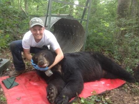 Braiden this summer collecting data from a tranquilized bear.