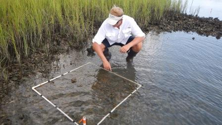 Marsh monitoring at the Rachel Carson Reserve in Middle Marsh