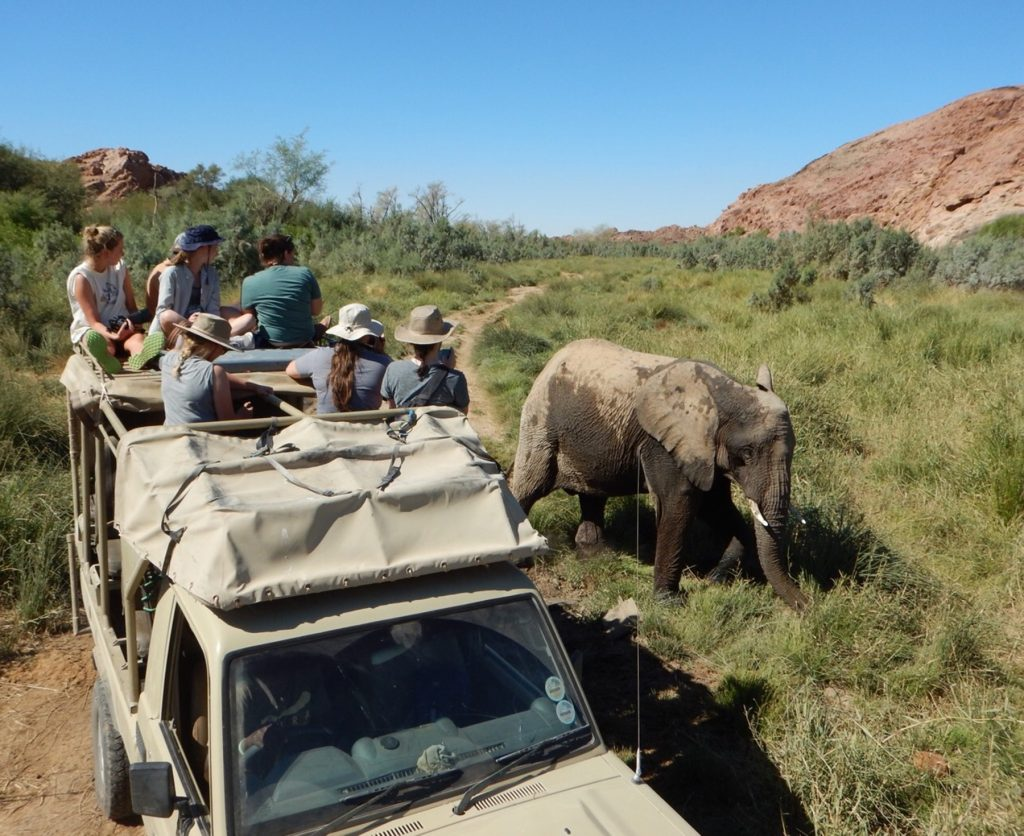 A jeep full of students watching an elephant pass.