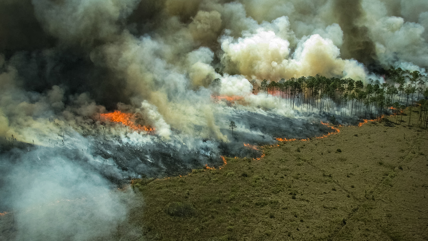 Amazon Rainforest Fires: Everything You Need to Know | College of ...