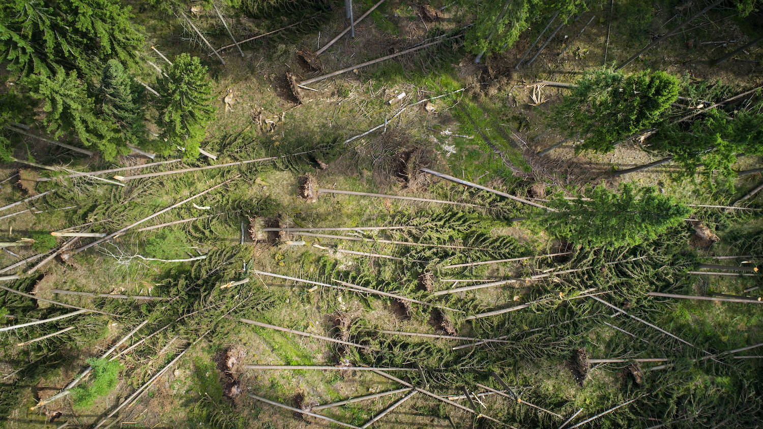 Trees after a Hurricane - Hydrology and Watershed Management Forestry and Environmental Resources at NC State University