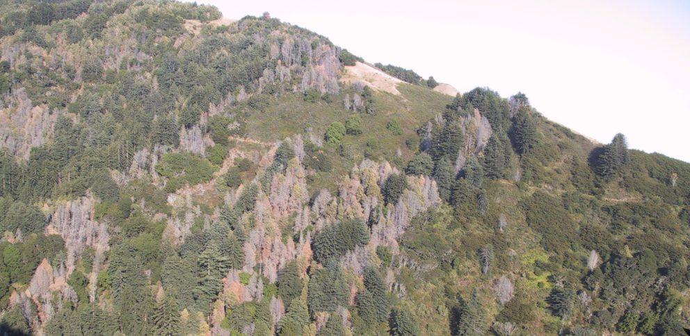 An image of a landscape demonstrating the spread of Sudden Oak Death