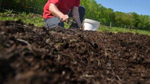 weeding a garden bed