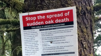 a sign with guidelines for stopping the spread of sudden oak death disease