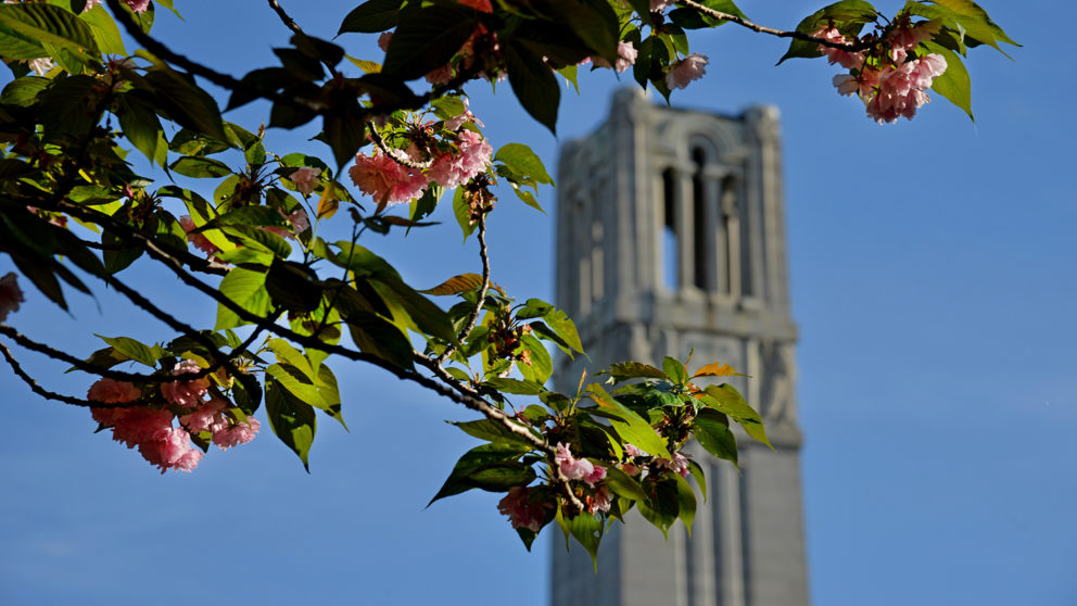 Memorial Belltower and spring blossoms.