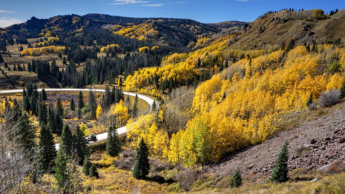 a scenic drive through forests with golden autumn color