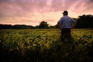Farmer out standing in his soybean field