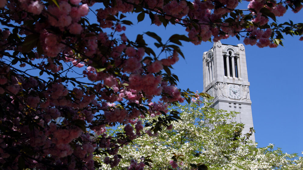 The belltower in spring with flowering trees in the foreground