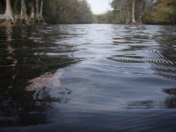 Lumbee River