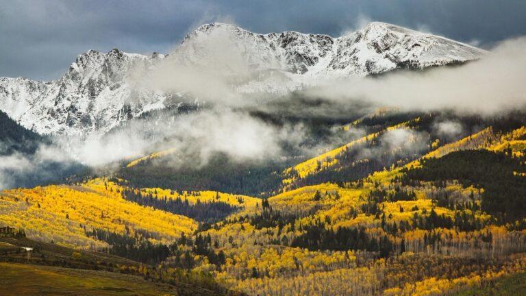 Aspen trees in the Colorado mountains.