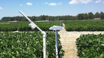 A small white box on PVC pipe poles over plots of soybeans in sandy soil.