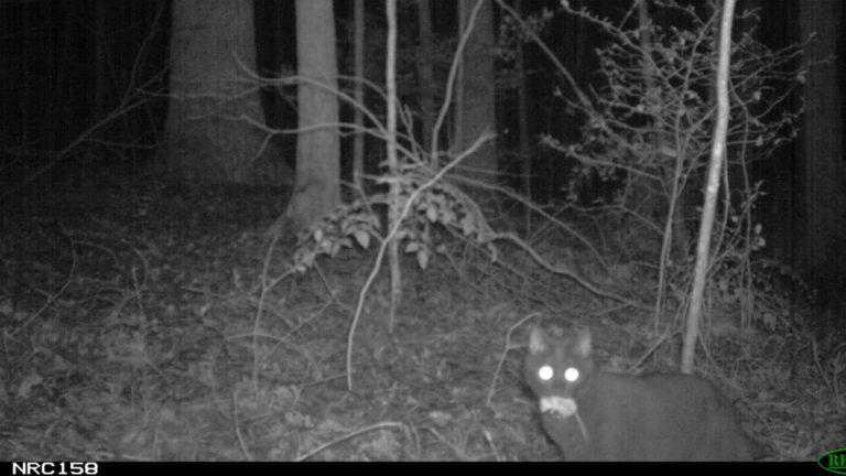 Coyote Night