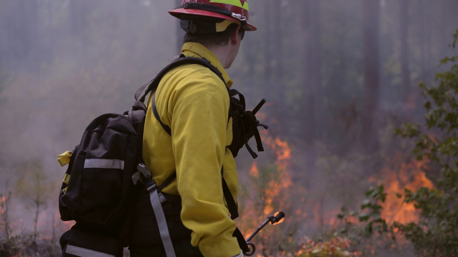Controlled Burn at Hill Forest