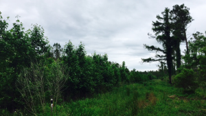City of Jacksonville Land Treatment Site forest