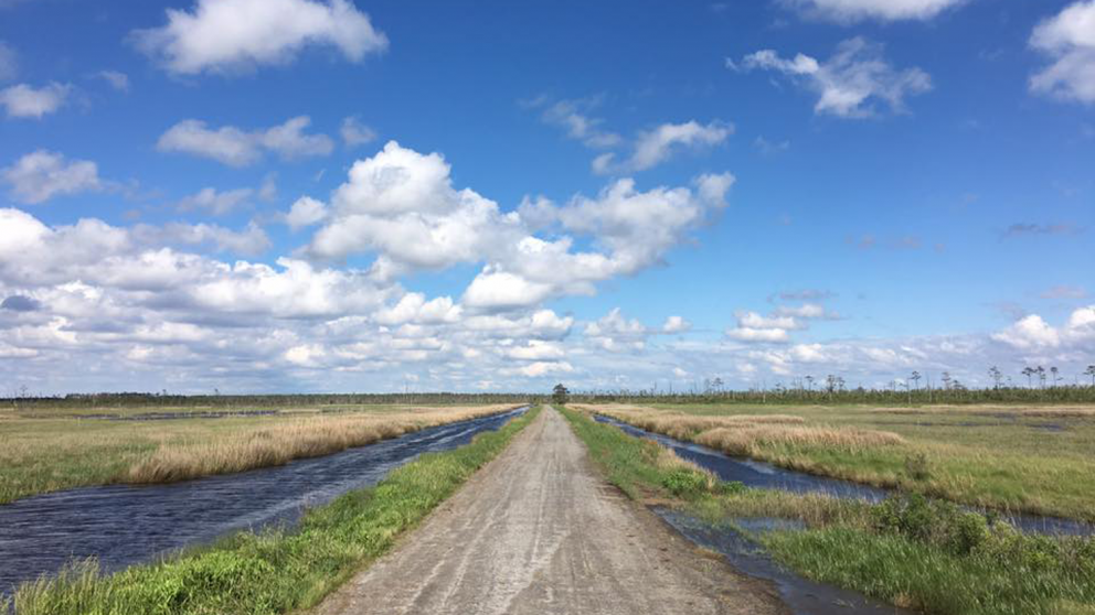 Pamlico Road in Dare County, North Carolina.