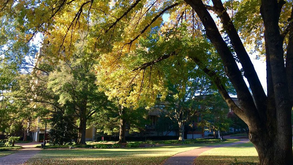 Fall in the Court of North Carolina