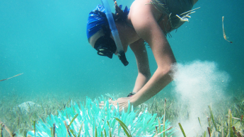 Elisabeth Frasch conducts undergraduate research in The Bahamas
