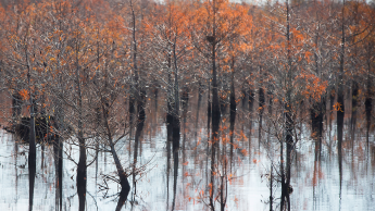 Trees impacted by saltwater intrusion