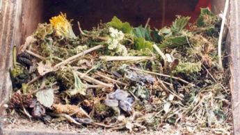 starling nest