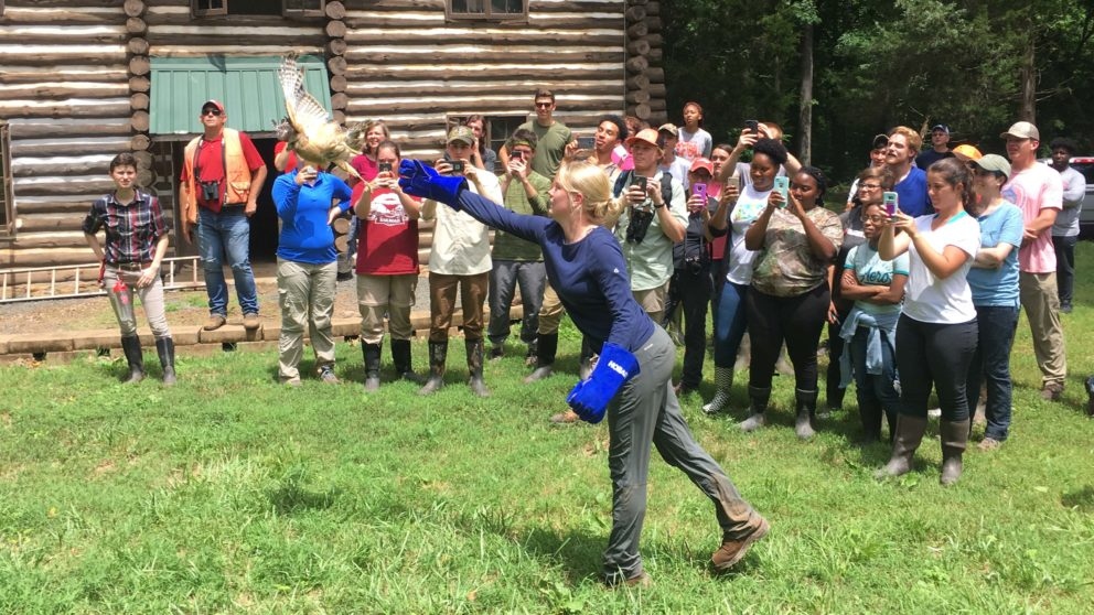 Raptor Release at Summer Camp