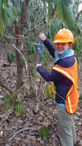 Student conducts field work on a tree