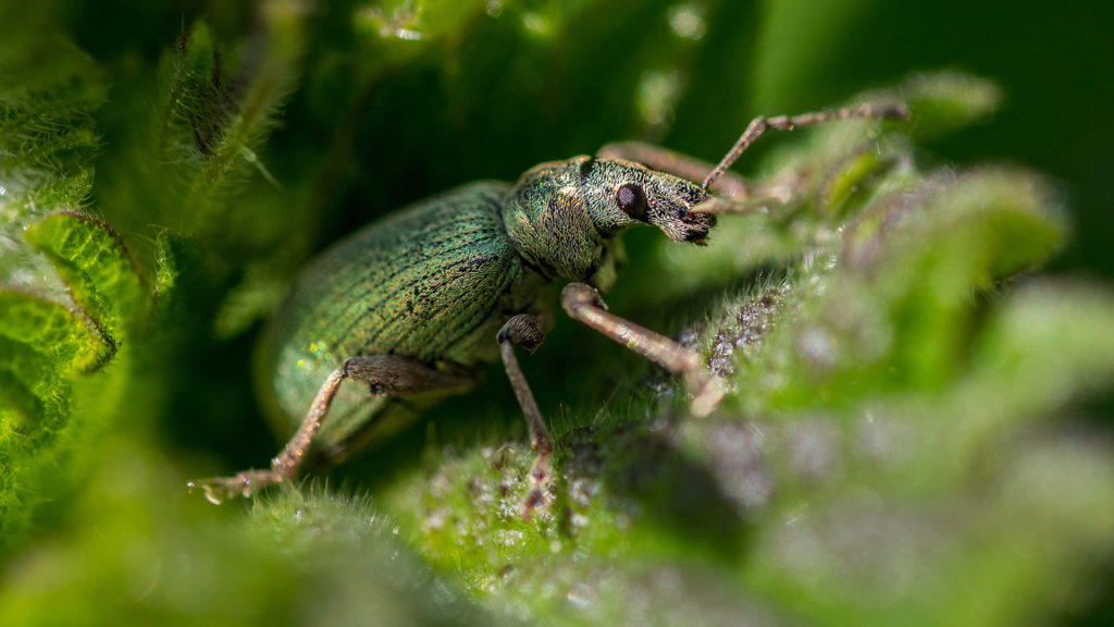 How Big Data Can Help Predict the Spread of Pests and Pathogens