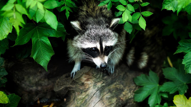 Children Prefer Faraway Wildlife to Local Nature