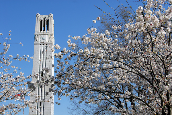 Belltower and blossoms on a Spring morning