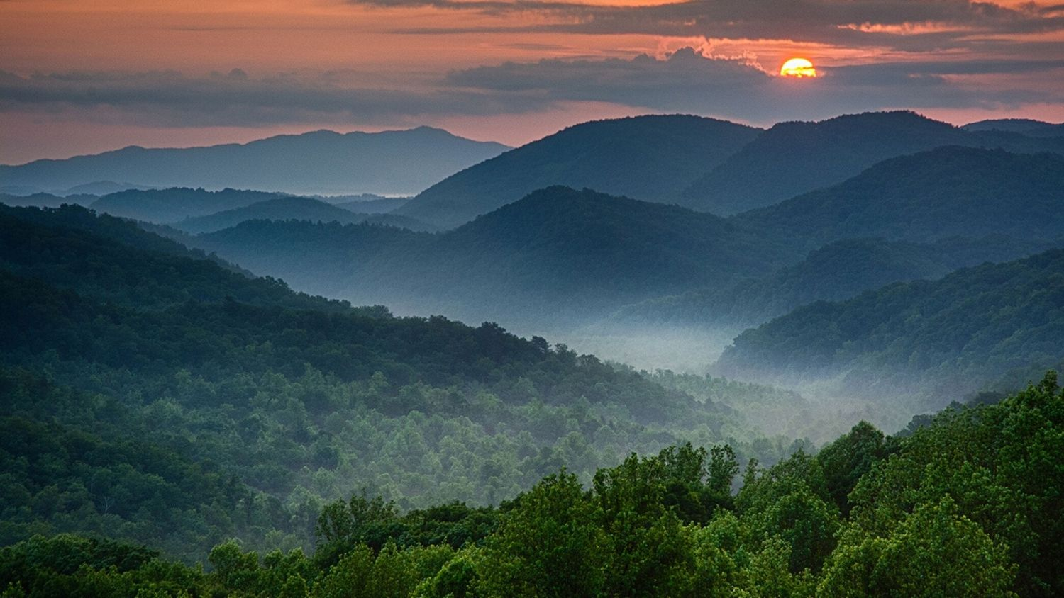Which NC flower are you, College of Natural Resources, Great Smokey Mountains, courtesy Chris Mobley