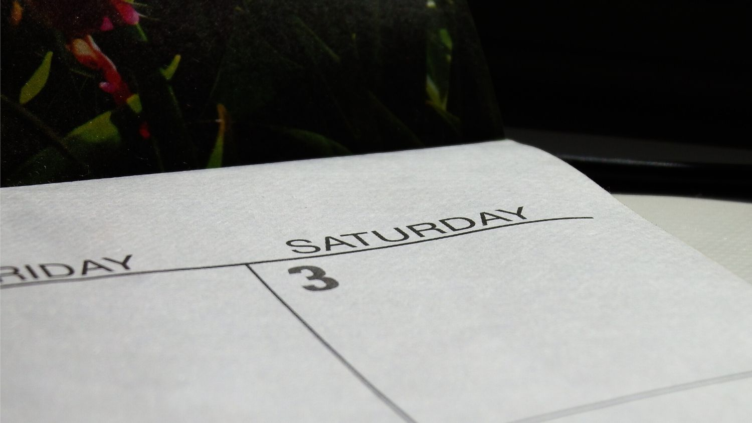 Which NC tree are you, College of Natural Resources, Saturday on calendar, courtesy Lauren McLaughlin