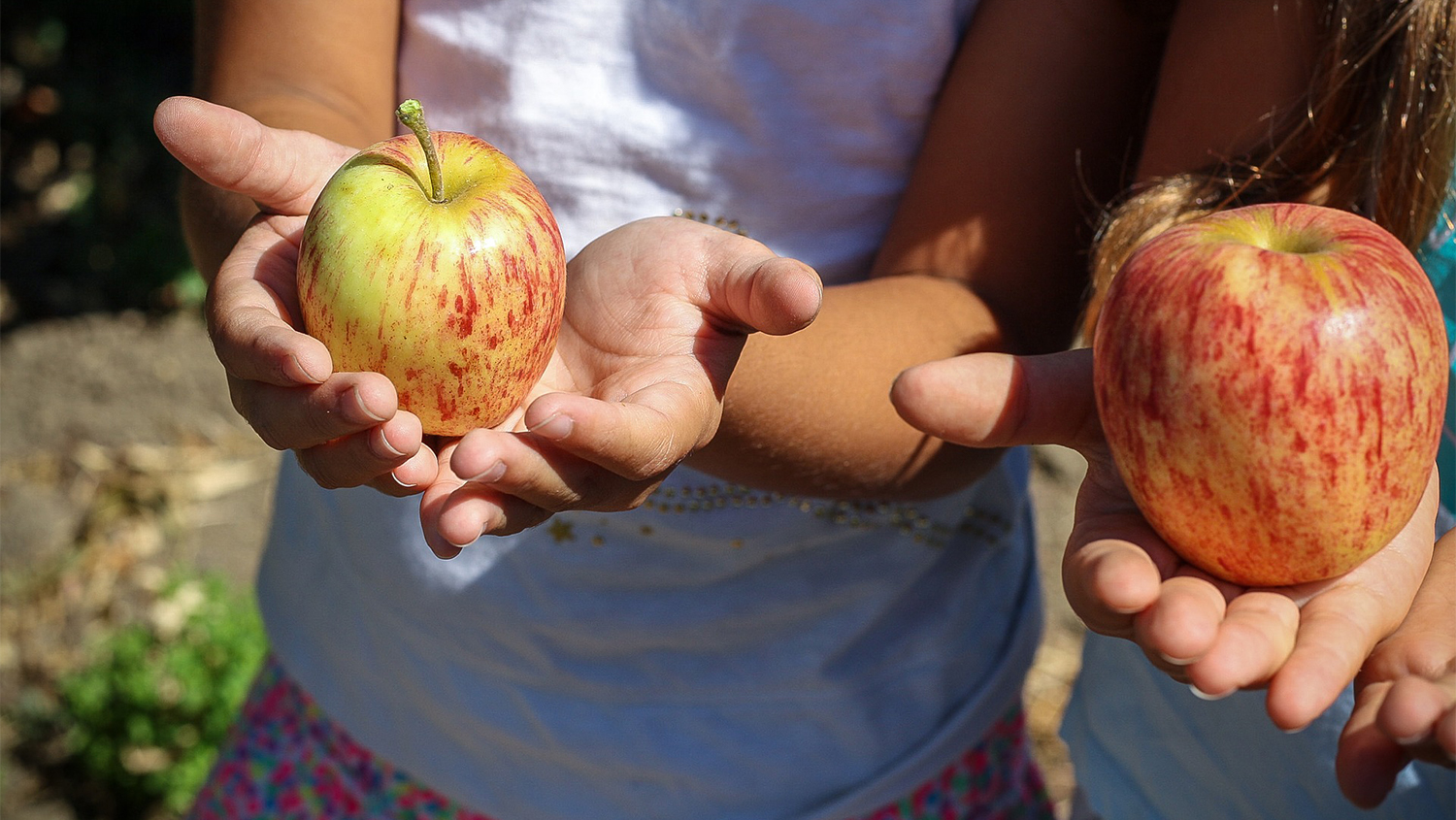 children holding apples during agritourism experience