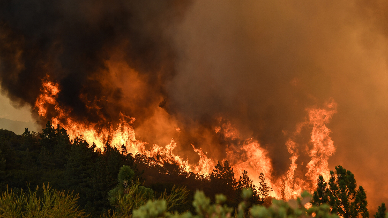 burning wildfire