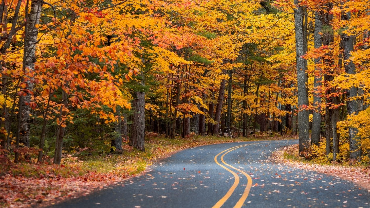 Which North Carolina butterfly are you?, College of Natural Resources, fall forest and road, courtesy Dave Hoefler