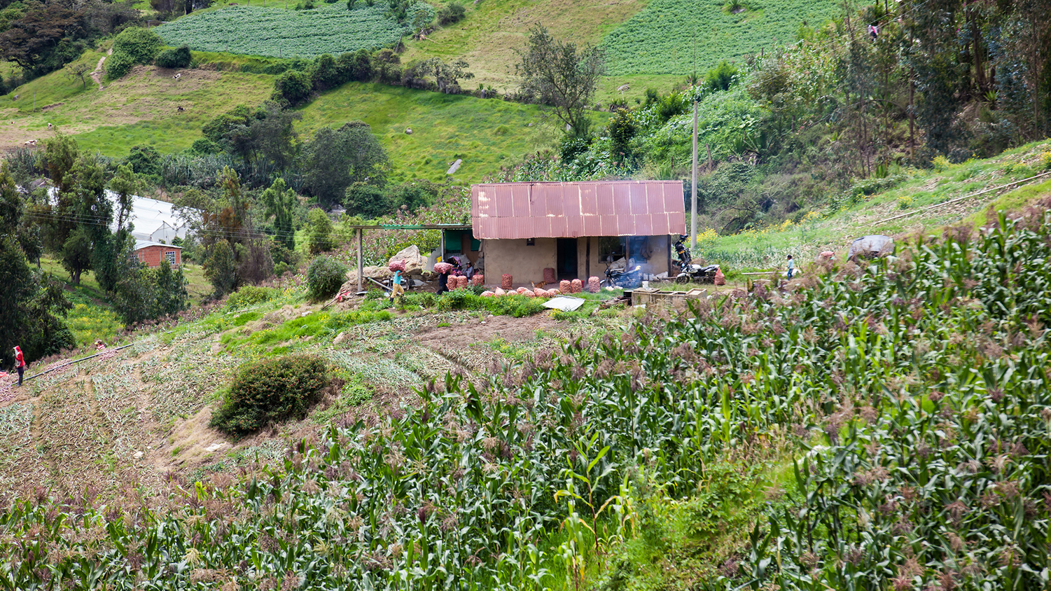 a small farm in the mountains of Colombia