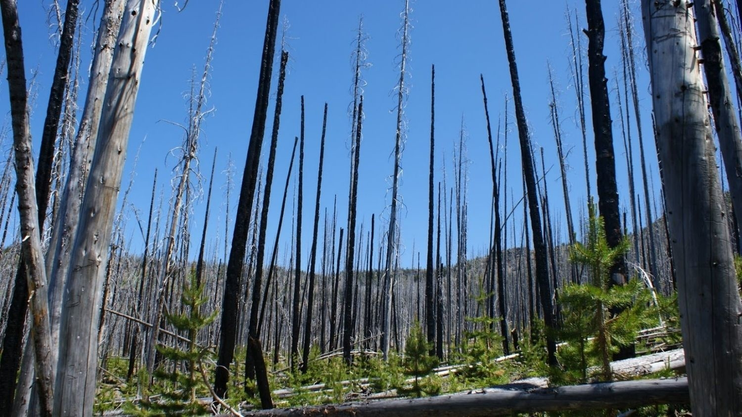 Forest in Oregon damaged by fire.