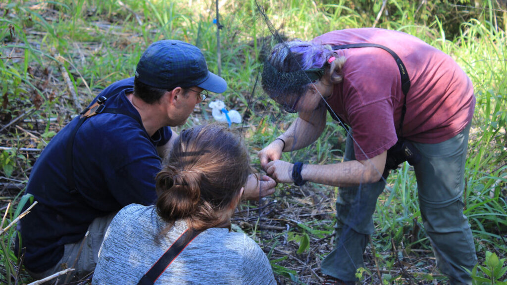 Chris Moorman, professor and interim associate head of the Department of Forestry and Environmental Resources, teaches students how to capture and band birds during a study abroad trip in Nicaragua. Photo provided.